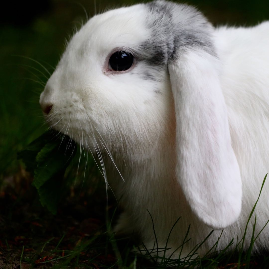 How to photograph your rabbit (helpful illustrated guide)