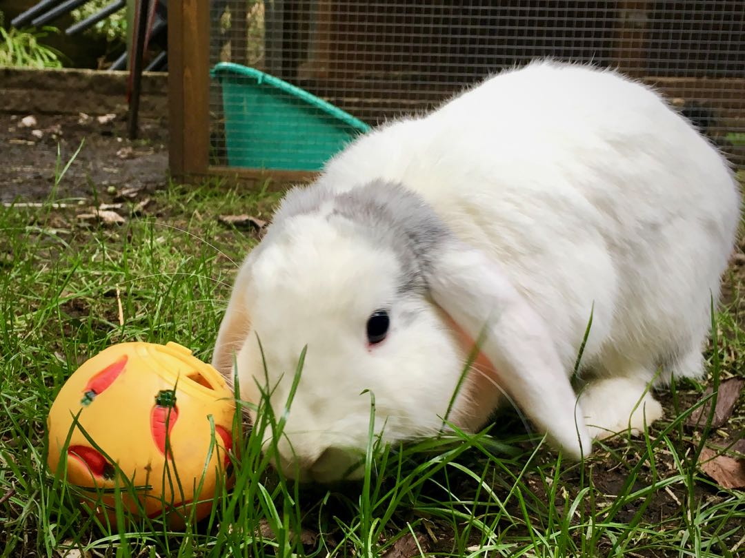 10 of the best rabbit toys (our bunnies loved them all!)
