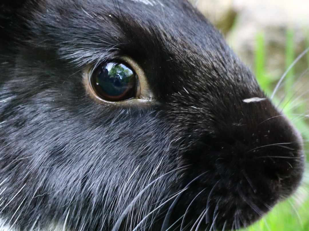 How rabbits see the world: in-depth guide