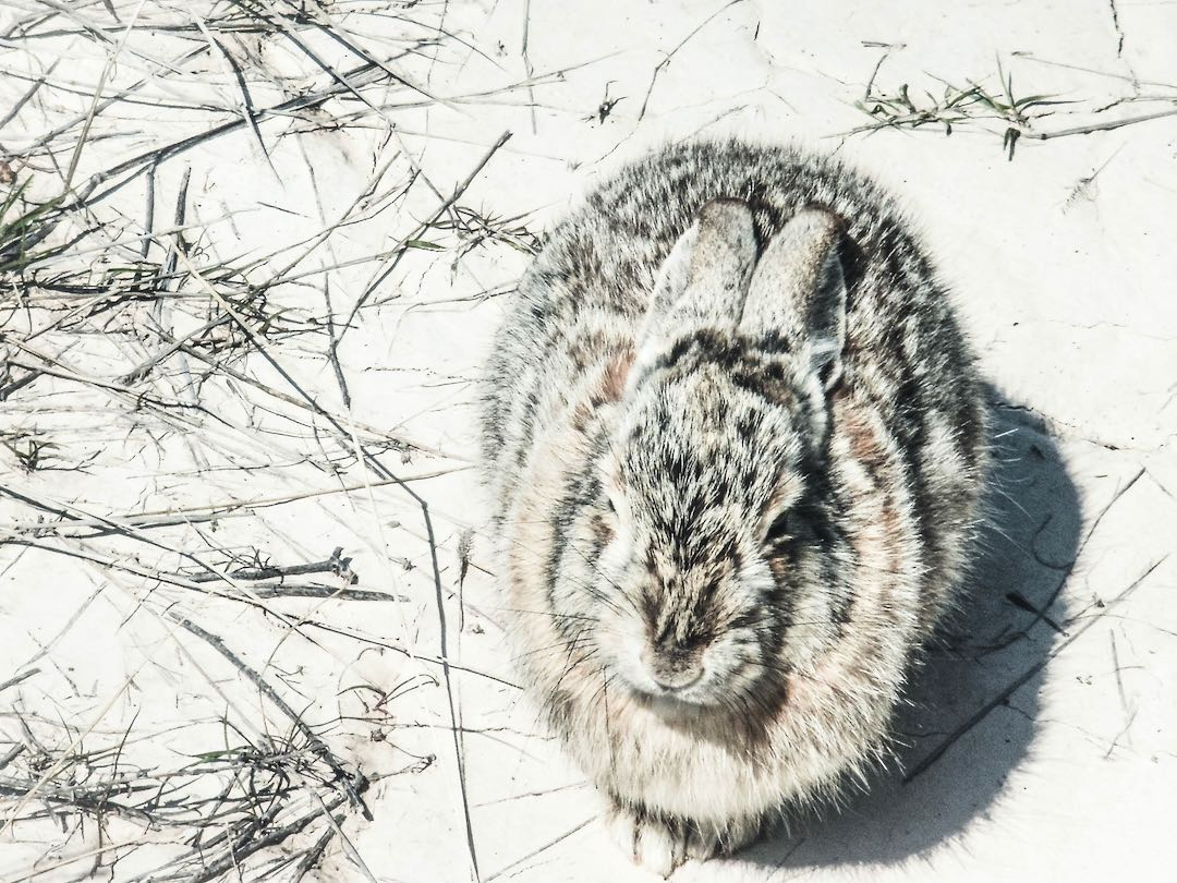 Do rabbits get cold at night? How cold is too cold?