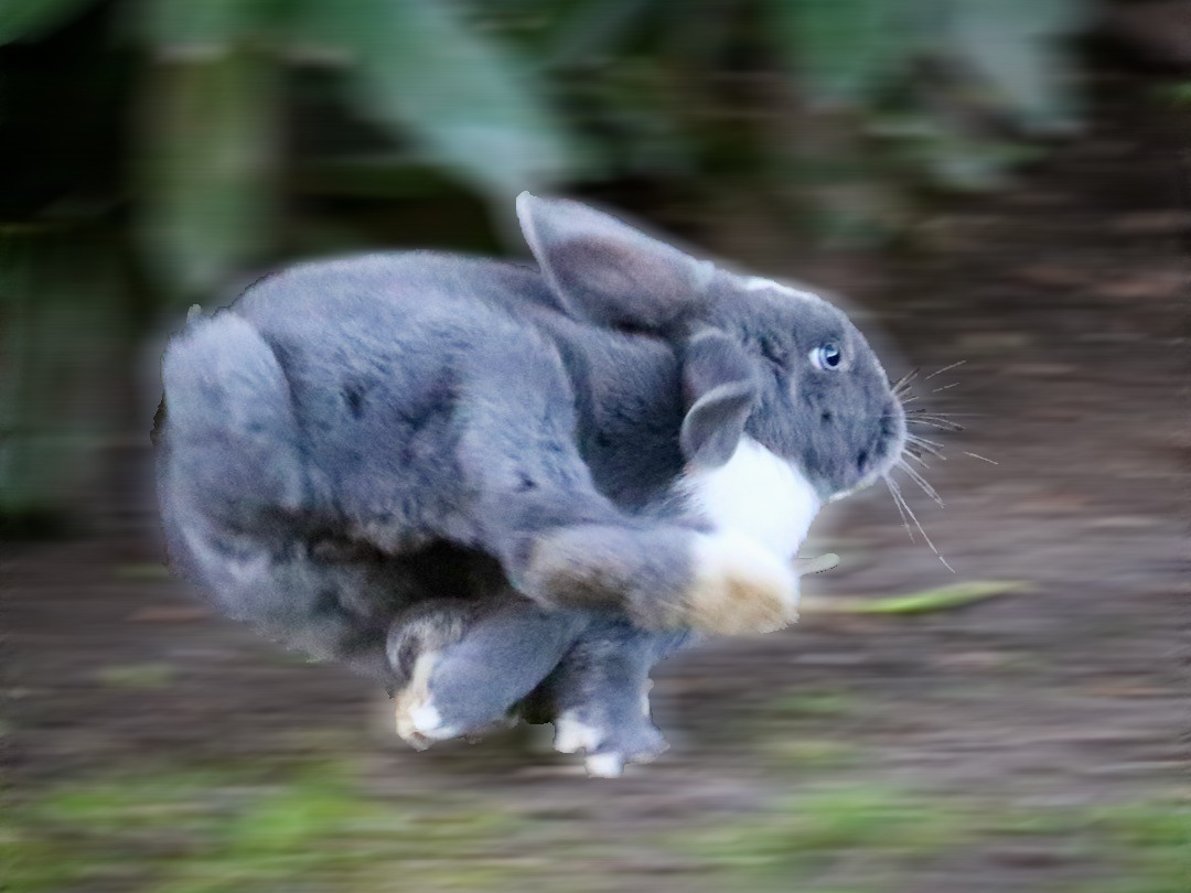 How fast can rabbits run?