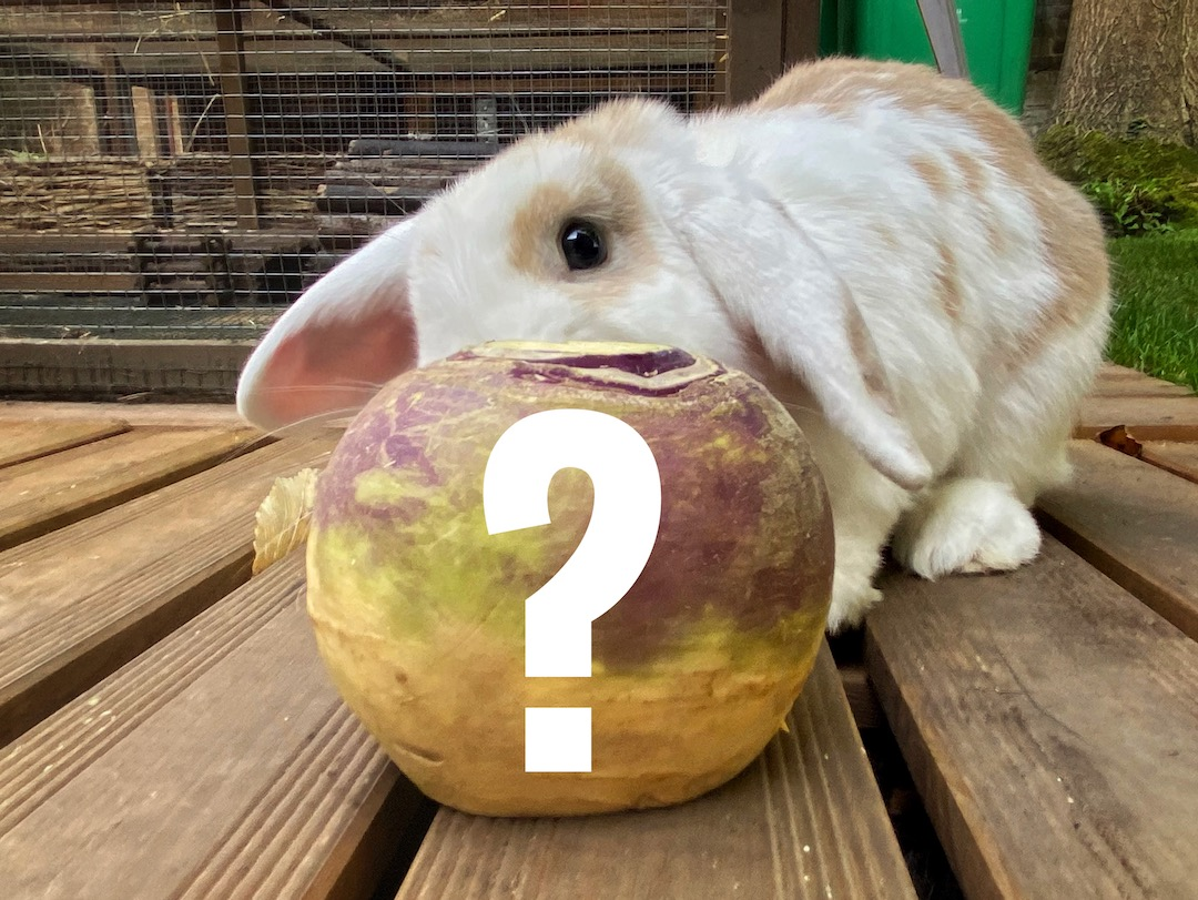 Can rabbits eat swede (rutabaga)?