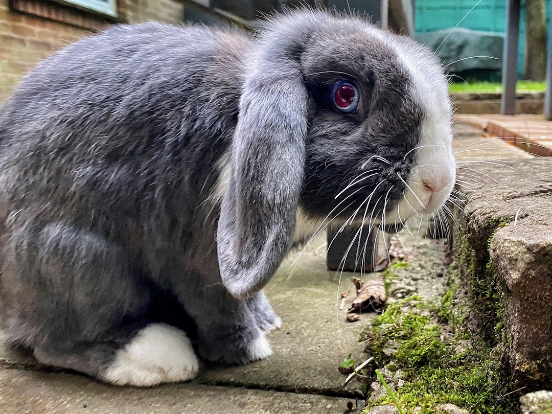 What vitamins and minerals do rabbits need?